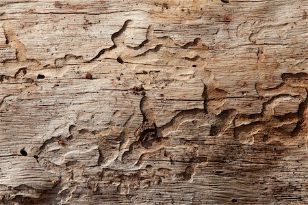 forestry - Close-up shot of wood grain pattern Stock Photo - Premium Royalty-Free, Code: 693-05794401