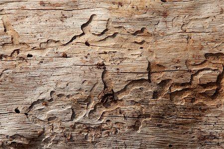 Close-up shot of wood grain pattern Stock Photo - Premium Royalty-Free, Code: 693-05794401