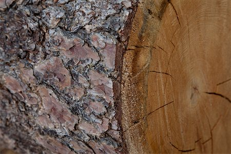 forestry - Extreme close-up view of tree bark Stock Photo - Premium Royalty-Free, Code: 693-05794402