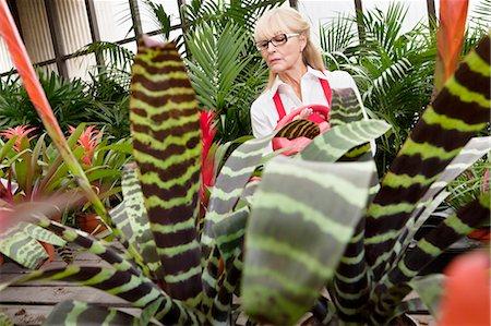 Senior female gardener working in greenhouse Stock Photo - Premium Royalty-Free, Code: 693-06120931