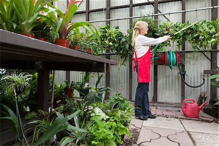 Side view of a senior florist spraying pesticide in greenhouse Stock Photo - Premium Royalty-Free, Code: 693-06324013