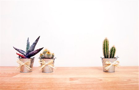 A variety of Cacti in pots Stock Photo - Premium Royalty-Free, Code: 693-06967528