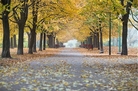 fall - View of walkway and autumn trees in park Stock Photo - Premium Royalty-Free, Code: 693-07672879