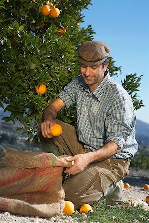 single fruits tree - Farmer picking oranges Stock Photo - Premium Royalty-Free, Code: 693-03312660