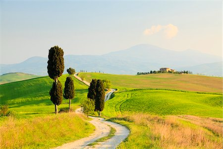 Cypress Trees and Dirt Road, Pienza, Val d'Orcia, Tuscany, Italy Stock Photo - Rights-Managed, Code: 700-04525218
