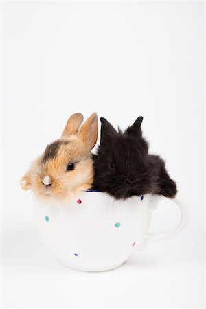 spotted - Two Dwarf Rabbits in Teacup Stock Photo - Rights-Managed, Code: 700-04926446