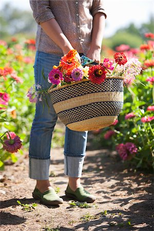 Woman with Basket of Cut Flowers Stock Photo - Rights-Managed, Code: 700-04931668