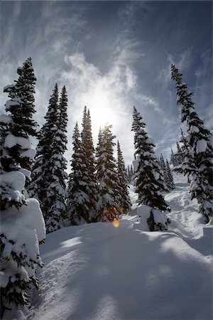 snow covered trees - Snow Covered Trees, Whistler Mountain, Whistler, British Columbia, Canada Stock Photo - Rights-Managed, Code: 700-05389299