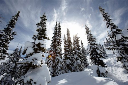 snow covered trees - Snow Covered Trees, Whistler Mountain, Whistler, British Columbia, Canada Stock Photo - Rights-Managed, Code: 700-05389300