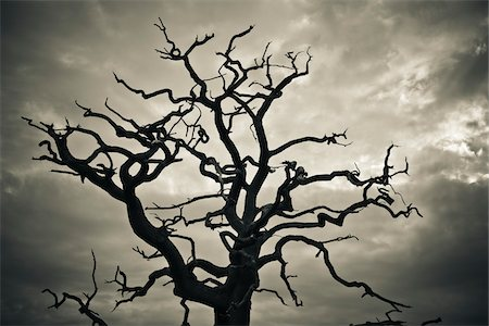 Branches of Dead Tree Against Cloudy Sky Stock Photo - Rights-Managed, Code: 700-05452217