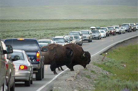 Buffalo Causing Traffic Jam, Yellowstone National Park, Wyoming, USA Stock Photo - Rights-Managed, Code: 700-05452225