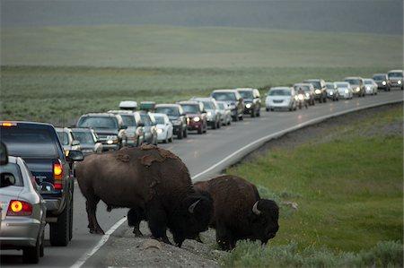 Buffalo Causing Traffic Jam, Yellowstone National Park, Wyoming, USA Stock Photo - Rights-Managed, Code: 700-05452226