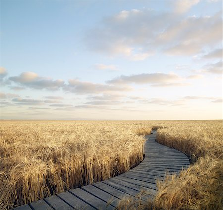 Boardwalk Through Wheat Field, Itasca, Texas, USA Stock Photo - Rights-Managed, Code: 700-05524545