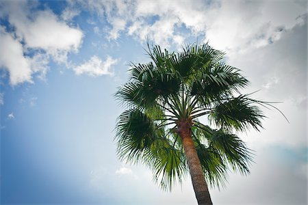 palm - Palm Tree, Monaco, Cote d'Azur Stock Photo - Rights-Managed, Code: 700-05560281