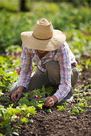 farmhand (female) - Farmer Working on Organic Farm Stock Photo - Rights-Managed, Code: 700-05602719
