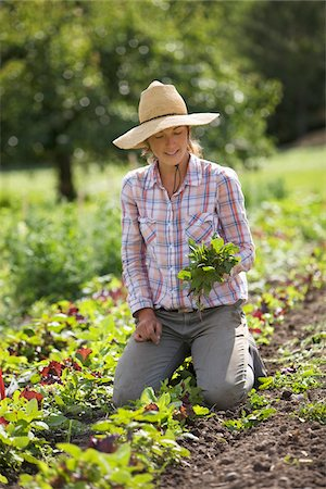 farmhand (female) - Farmer on Organic Farm Stock Photo - Rights-Managed, Code: 700-05602721