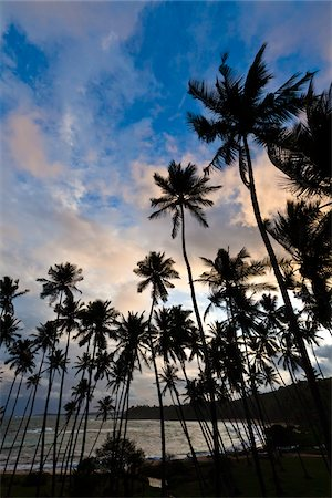 palm - Beach at Sunset, Amanwella Hotel, Tangalle, Sri Lanka Stock Photo - Rights-Managed, Code: 700-05642164