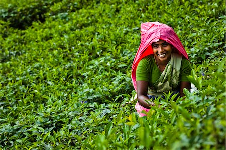 farmhand (female) - Portrait of Tea Picker, Nuwara Eliya District, Sri Lanka Stock Photo - Rights-Managed, Code: 700-05642236