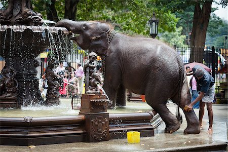 restrained - Elephant Being Washed in Public Fountain before Perahera Festival, Kandy, Sri Lanka Stock Photo - Rights-Managed, Code: 700-05642268