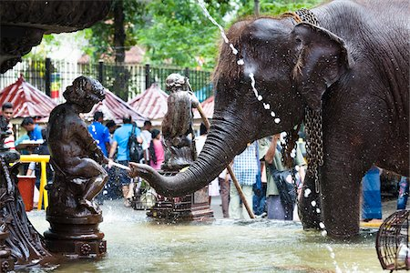 restrained - Elephant in Public Fountain prior to Perahera Festival, Kandy, Sri Lanka Stock Photo - Rights-Managed, Code: 700-05642269