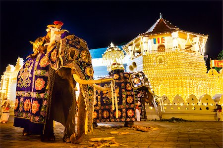 Elephants and Temple of the Tooth, Esala Perahera Festival, Kandy, Sri Lanka Stock Photo - Rights-Managed, Code: 700-05642336