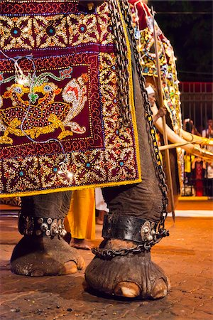 restrained - Elephant at Esala Perahera Festival, Kandy, Sri Lanka Stock Photo - Rights-Managed, Code: 700-05642342