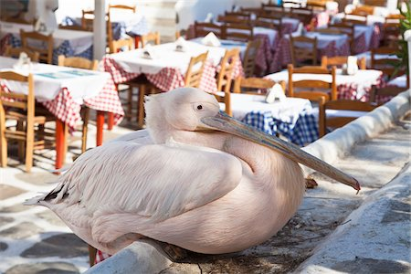 White Pelican, Chora, Mykonos Town, Mykonos, Cyclades Islands, Greece Stock Photo - Rights-Managed, Code: 700-05653129