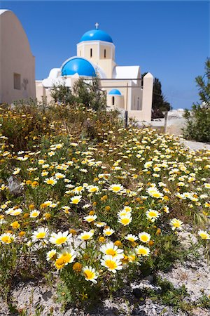 Wildflowers, Oia, Santorini Island, Greece Stock Photo - Rights-Managed, Code: 700-05653120
