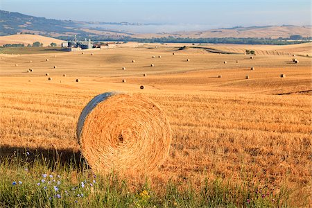Hay Bales in Field, Val d'Orcia, Tuscany, Italy Stock Photo - Rights-Managed, Code: 700-05803071
