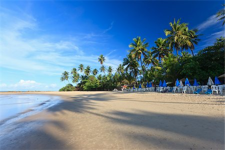 palm - Praia de Coqueirinho, Paraiba, Brazil Stock Photo - Rights-Managed, Code: 700-05810258
