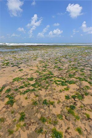 Seaweed on Beach, Pipa Beach, Rio Grande do Norte, Brazil Stock Photo - Rights-Managed, Code: 700-05821823