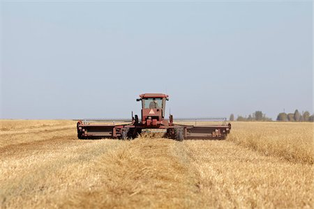 Harvesting Oats, Starbuck, Manitoba, Canada Stock Photo - Rights-Managed, Code: 700-05973207