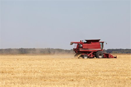 Combine Harvesting Oats, Starbuck, Manitoba, Canada Stock Photo - Rights-Managed, Code: 700-05973211