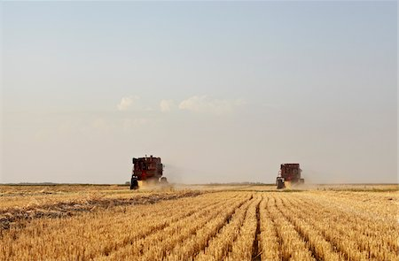 Axial-Flow Combines Harvesting Wheat in Field, Starbuck, Manitoba, Canada Stock Photo - Rights-Managed, Code: 700-05973566