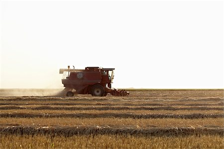 Axial-Flow Combine Harvesting Wheat in Field, Starbuck, Manitoba, Canada Stock Photo - Rights-Managed, Code: 700-05973568