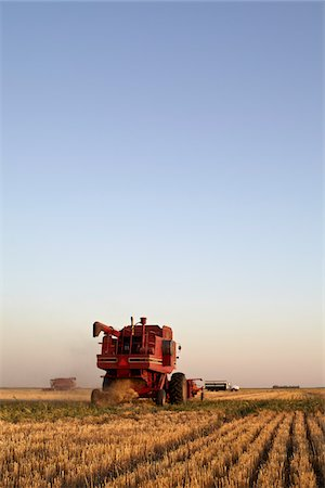 Axial-Flow Combines Harvesting Wheat in Field, Starbuck, Manitoba, Canada Stock Photo - Rights-Managed, Code: 700-05973574