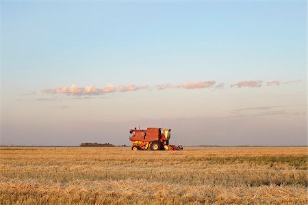Axial-Flow Combines Harvesting Wheat in Field, Starbuck, Manitoba, Canada Stock Photo - Rights-Managed, Code: 700-05973575