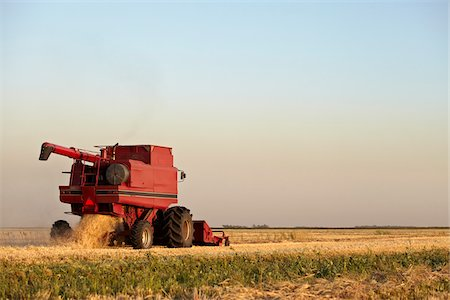 Axial-Flow Combines Harvesting Wheat in Field, Starbuck, Manitoba, Canada Stock Photo - Rights-Managed, Code: 700-05973570
