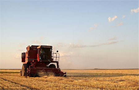 Axial-Flow Combines Harvesting Wheat in Field, Starbuck, Manitoba, Canada Stock Photo - Rights-Managed, Code: 700-05973571