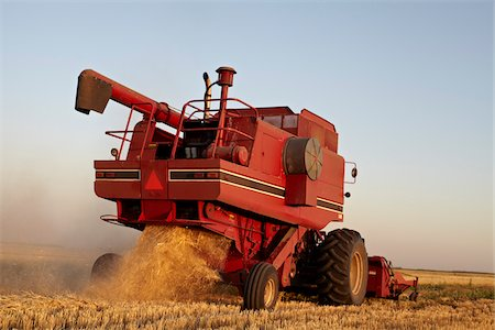 Axial-Flow Combines Harvesting Wheat in Field, Starbuck, Manitoba, Canada Stock Photo - Rights-Managed, Code: 700-05973572