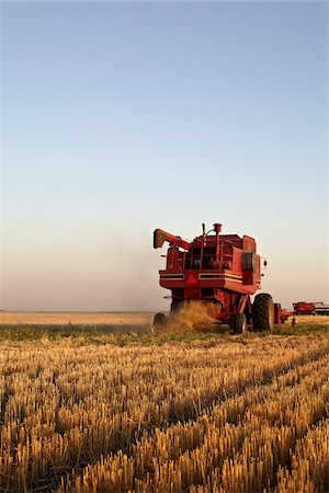 Axial-Flow Combines Harvesting Wheat in Field, Starbuck, Manitoba, Canada Stock Photo - Rights-Managed, Code: 700-05973573