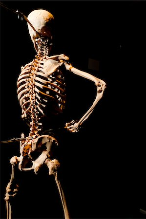 Plastinated Human Skeleton Stock Photo - Rights-Managed, Code: 700-06038080