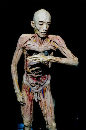 exhibition - Plastinated Human Body Without Skin Stock Photo - Rights-Managed, Code: 700-06038081
