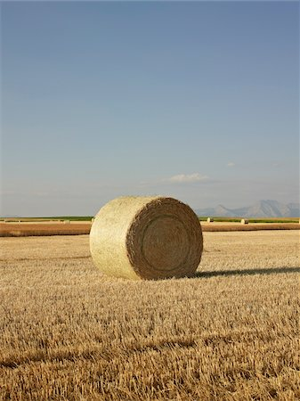 Hay Bale in Harvested Prairie Wheat Field, Pincher Creek, Alberta, Canada Stock Photo - Rights-Managed, Code: 700-06038202