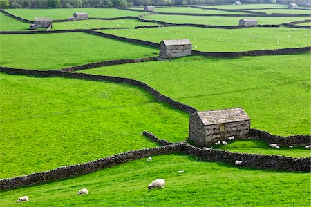Sheep and Stone Barns, Swaledale, Yorkshire Dales, North Yorkshire, England Stock Photo - Rights-Managed, Code: 700-06059804