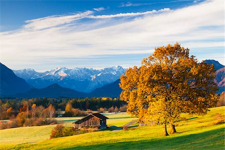 Oak Tree and Barn in front of Wetterstein Mountains and Zugspitz Range, Upper Bavaria, Germany Stock Photo - Rights-Managed, Code: 700-06125709