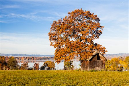 fall trees lake - Oak Tree and Hut by Lake Staffelsee, Upper Bavaria, Germany Stock Photo - Rights-Managed, Code: 700-06125710
