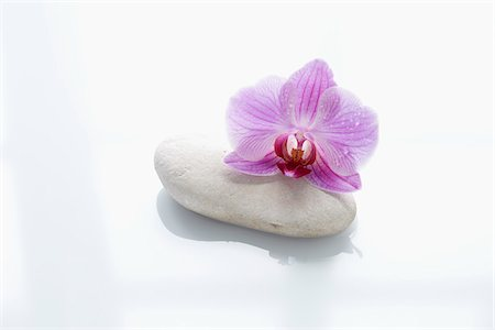 smooth - Orchid on Smooth Stone Stock Photo - Rights-Managed, Code: 700-06302276