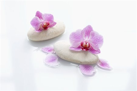 smooth - Orchids on Smooth Stones Stock Photo - Rights-Managed, Code: 700-06302278