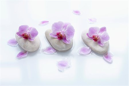 Orchids on Smooth Stones Stock Photo - Rights-Managed, Code: 700-06302280